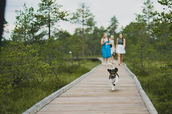 The Best Dog Parks in New Jersey